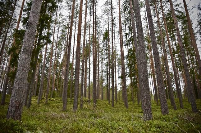 Skogscentralens personalantal väntas minska i samband med samarbetsförhandlingarna.